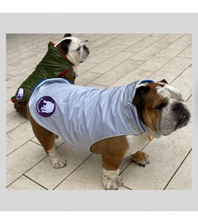 PARADISE waterproof for English and French bulldogs